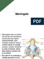 meningele