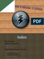 Interacción-Célula-Célula2