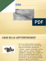 leptopirosis- guil