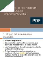 Desarrollo Del Sistema Ose Muscular