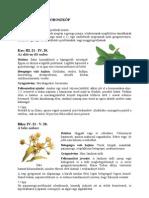 Gyógynövény-horoszkóp