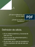 Diapositivas célula