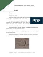 Casco, Chifre, Unha - Histologia