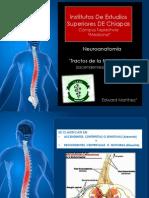 Tractos Medula Espinal