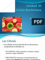 Unidad II La Celula Bacteriana