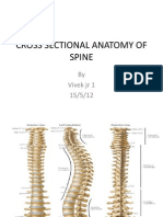 Cross Sectional Anatomy of Spine