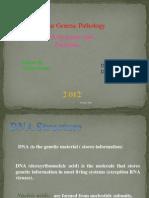 DNA Isolation - Copy