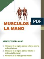 Musculos de La Manos