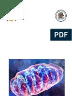 Seminario Nº 6 Patologías mitocondriales