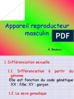 reproduction mâle