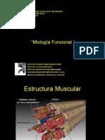 Formas Participacion Muscular (1)