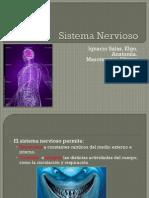 05 - Sistema Nervioso