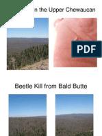 Gov Beetle Kill