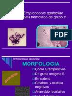 Streptococcus Agalactiae 1