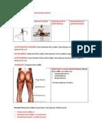 Semiologia Osteomuscular Del Miembro Inferior