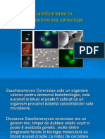 Transform Area La Saccharomyces