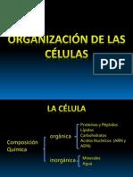 Organización de las células