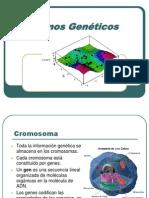 IntroAlgoritmosGenéticoshg