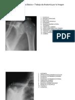Trabajo Anatomia Imagen[1]