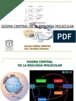 replicacion.(Qca.Ac.Nuclei.)