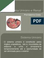 Sistema Urinário e Renal