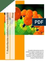 7.1 Fosforilacion Oxidativa y Fotosforilacion