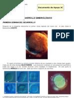 1. desarrollo embrion. histologia 3