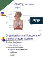 Ch25 Respiratory System