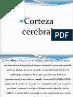1.-Corteza Cerebral Jash.31.05.12