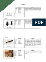 Lampiran Deskripsi Species