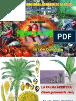 clase 1  Introducción de palma