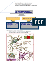 Sistema_Nervioso_Periférico_y_organos_de_los_sentidos[1]