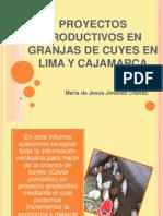 Proyectos Productivos en Granjas de Cuyes en Lima