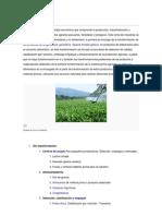 Agroindustria  documento