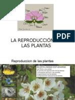 lLa reproducción de las plantas