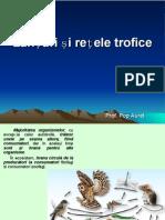 lectie_15_lanturi_si_retele_trofice.