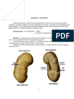Anatomie II Curs 10