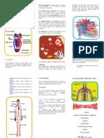 Aparato Circulatorio (Word Triptico)