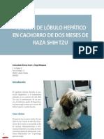 Cv30 Torsión de lóbulo Hepático en Cachorro de Dos Meses de Raza Shih Tzu