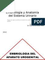 01 Embriología & Anatomía del Sistema Urinario 1