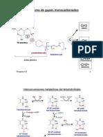 Sintesis de Aminoacidos