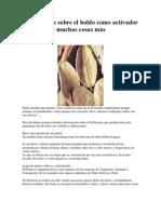 Información sobre el boldo como activador del hígado y muchas cosas más