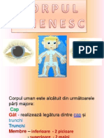 corpul_omenesc_2