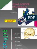 Anatomia Esdtes.2012 (1)