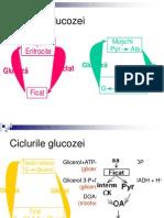 91Ciclurile Glucozei Alte Glucide