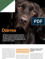 av17 Diarrea