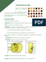 Germinacion semilla
