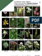 Catálogo de Plantas - 289 - Las-Monarcas