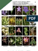 Catálogo de Plantas - 321 Cerro el Aguila