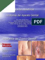 Anatomía del Aparato Genital